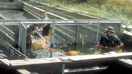 Glenariffe Salmon Research Station