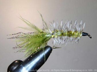 Woolly Buggar trout fly.