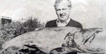 Big Canterbury Salmon.