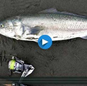 Light Tackle Kahawai Spinning – Exciting Low-Cost Game Fishing Video