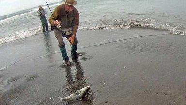 kahawai caught at the mouth of the Wairau Diversion, Marlborough