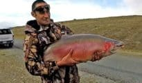 35lb rainbow trout from the Twizel Canals.