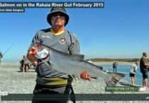Salmon caught in the Rakaia River Gut in 2015.