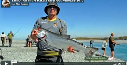 Salmon caught in the Rakaia River Gut in 2015.