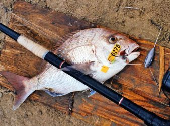 Snapper caught from Northland's Ninety Mile Beach. This is the fish every surfcaster wants to catch. Photo courtesy of Denis Moresby.