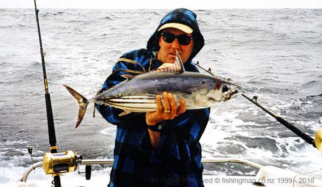 Skipjack tuna like this specimen where a marlin's favourite meal that year.