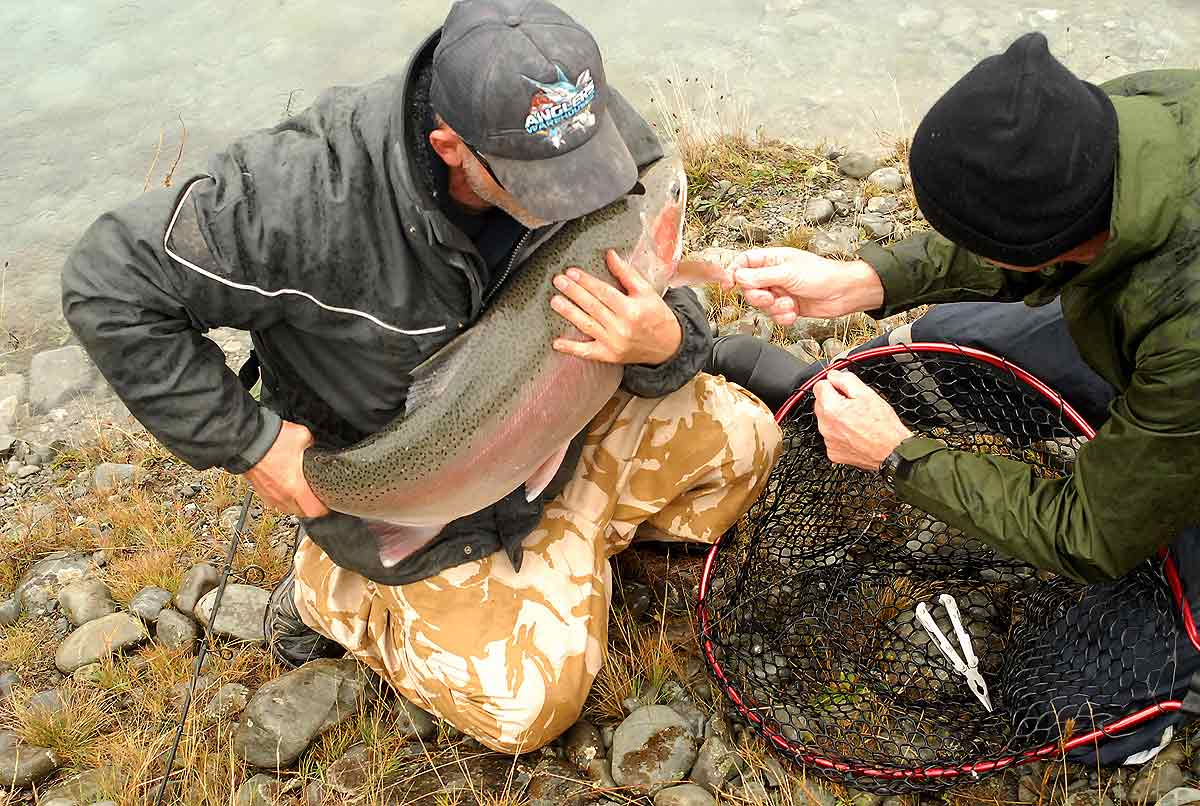 Big rainbow trout about to be released in Ohau A Canal.