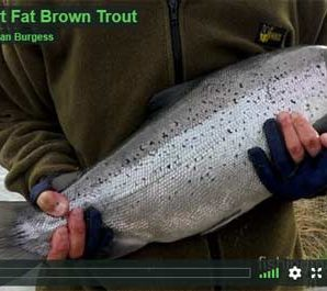 Short Fat Brown Trout Ohau Canal