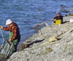 Hurunui River Whitebaiting featured image.
