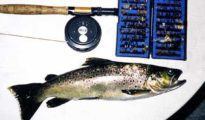 A Goddard Caddis tempts an Arnold River brown trout. Moana-Kotuku. Featured Image.