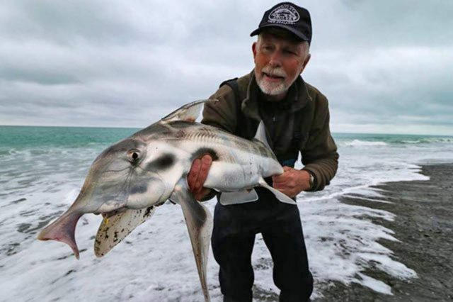 Malcolm Bell from The Complete Angler in Christchurch caught this cool elephant fish surfcasting at Birdlings Flat December 2016.