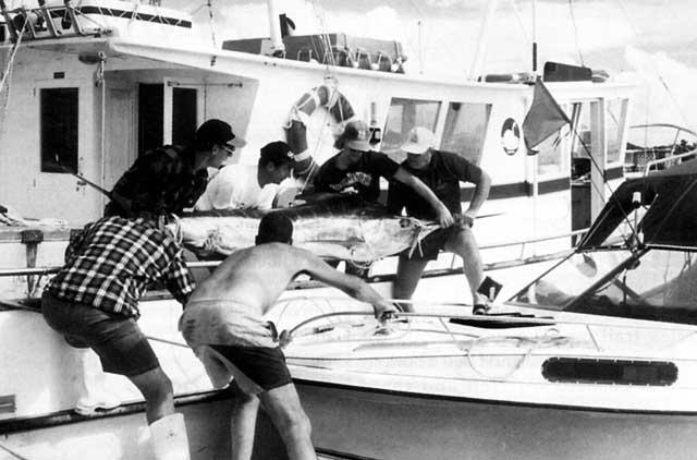 Transfer of Neil's striped marlin.