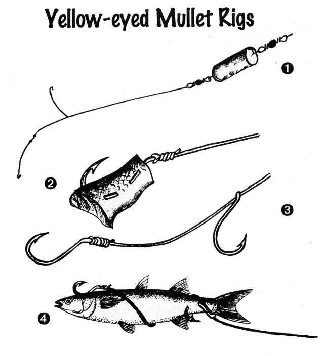 "(1) Float rig for catching yellow-eyed mullet. The hooks need be no more than six feet (1.8 metres) below the cork float. Hook size,"" around 6 - 8. line 12lb. (2) A juicy mullet cut-bait will lure almost any species to bite. They are excellent for red cod when surfcasting at night. (3) When fishing for sharks with mullet I use this two hook rig. The hook at right can slide to fit different baits. Use Twist-Weld for the trace if fishing for, or expecting sharks. (4) The yellow-eyed mullet rigged in this fashion will increase your hook-ups on many species. For barracouta, the mullet must be alive!"