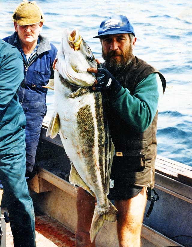 This huge trumpeter was taken off the Canterbury coast.