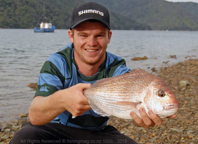 A good size eating snapper taken on surfcasting tackle in the inner Marlborough Sounds. The state of the tide, time of day, and time of year all play an important part when it comes to successful snapper fishing from shore.