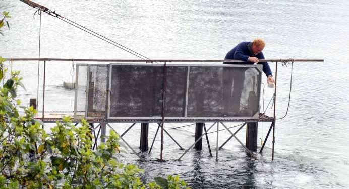 Whitebaiting in the Arawhata, Waiatoto, Turnbull, and Okuru Rivers