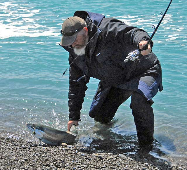 A huge sea-run brown captured and released at the mouth of the Rakaia River. It was taken on a feathered lure fished on a baitcaster with the aid of a D lead. This rod and reel outfit can be used for trout, kahawai, and salmon!