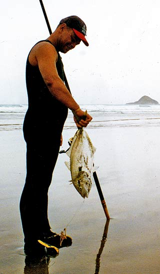 A contestant with trevally caught on tuatua bait. Motupia Island is in the background. Ninety Mile Beach, Northland. Photo, Denis Moresby.