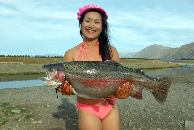 Bikini trout weighing 14.2 pounds landed at the confluence of the Pukaki and Ohau Canals.