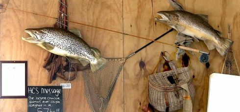 Brown trout mounts on display at Mt Cook salmon farm near Twizel. A three dimentional mount is way better than just a photograph.