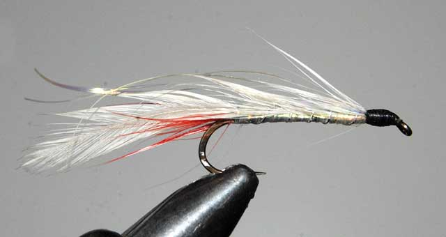 Grey Ghost trout fly.