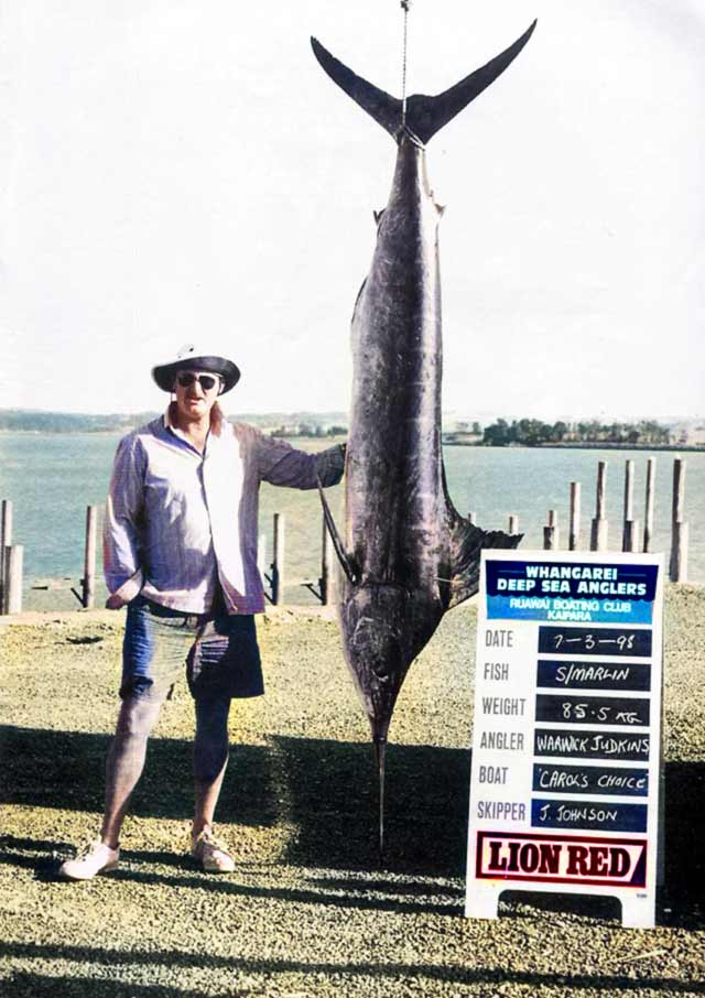 My 85.5kg West Coast striped marlin taken fishing out of Kaipara Harbour.