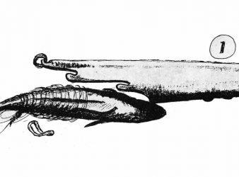 Jack Whittler's pilchard casting tube.