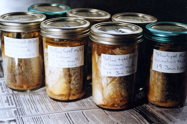 Bottled yellow-eyed mullet and kahawai together. The bones become very soft just like canned fish bought at the supermarket! Finally, don't forget to label each bottle with the contents and date.