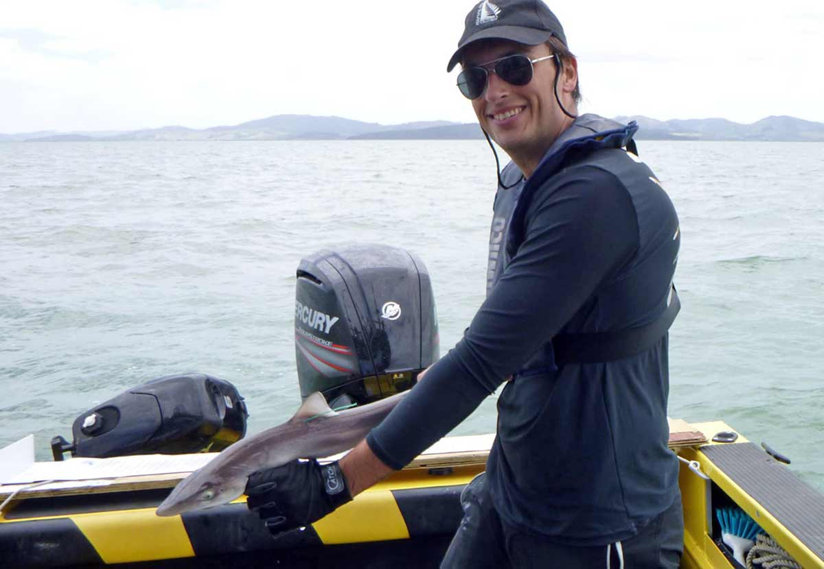 Alex Burton about to release a tagged school shark back into Kaipara Harbour.