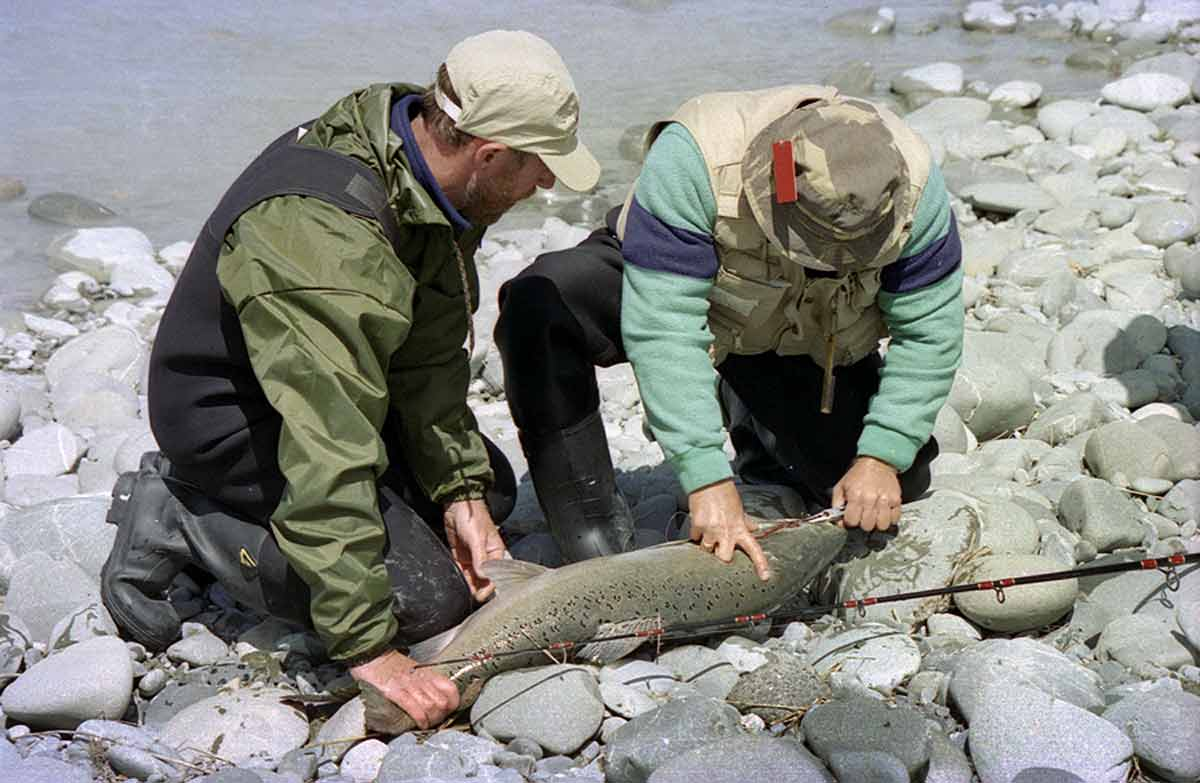 Salmon fishing has been an important part of the culture in Canterbury for generations. A big Rakaia River fish from the 1990s. Salmon have never been exactly easy to catch. Any day you get one is a red-letter day!