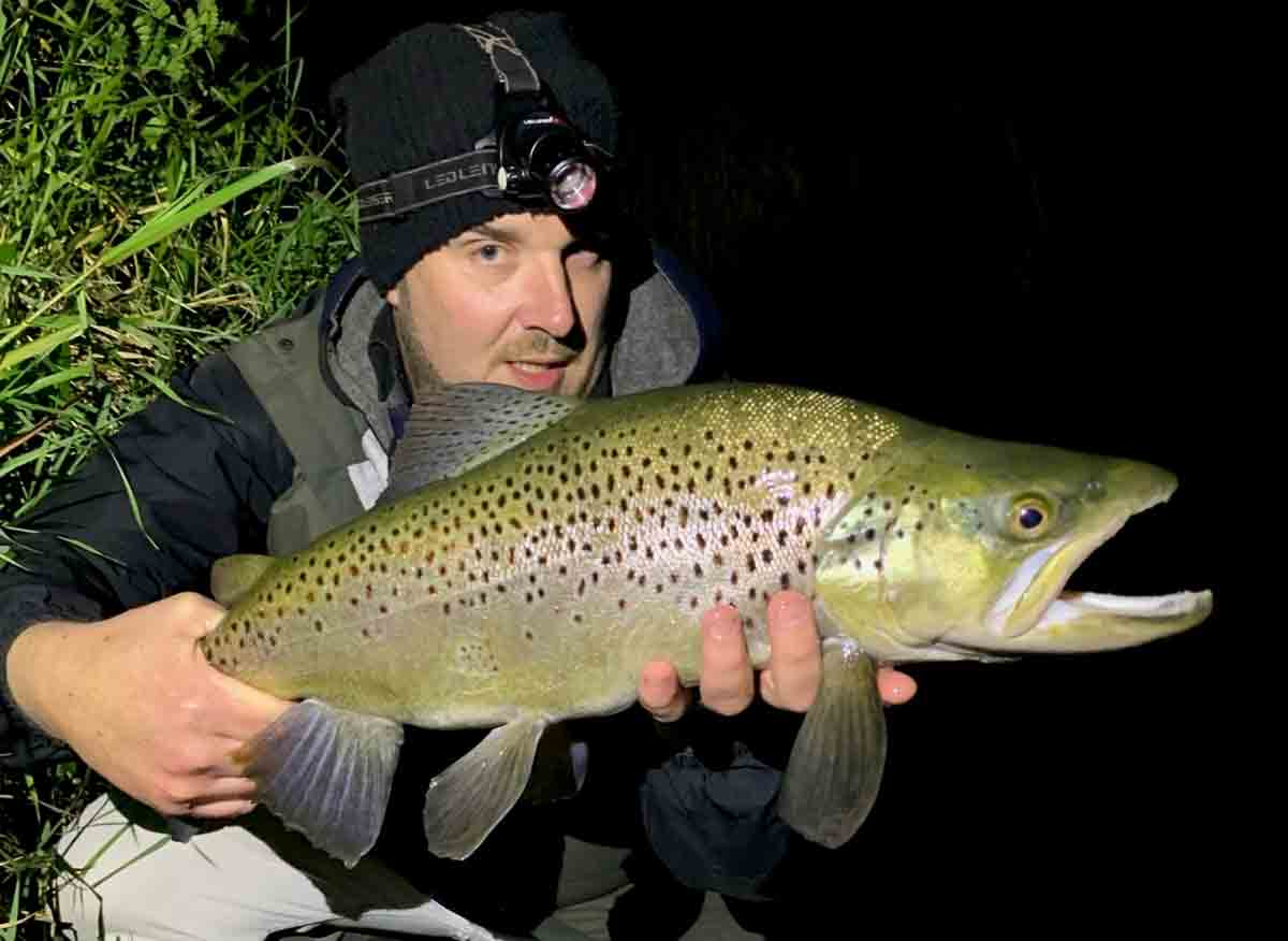 Brown trout in great condition from the Halswell River, Lake Ellesmere. Night Time Lurking.