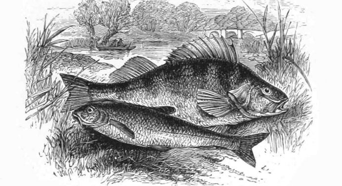 The Gudgeon King – A Coarse Fishing True Story Set in the Old Country